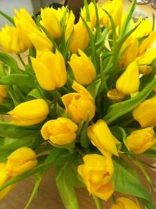 Bildresultat för gula tulpaner