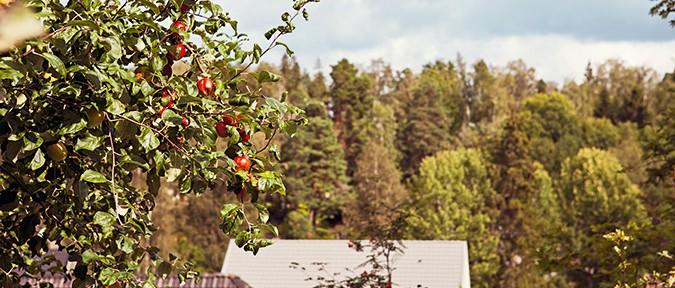 boende_rekrytering_äppelträd_sommar_villa_675x310