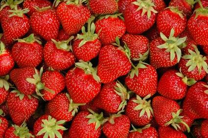 jordgubbar_rekrytering