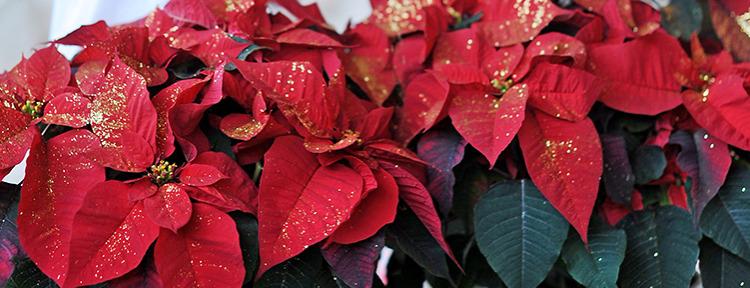 Julstjärna med glitter