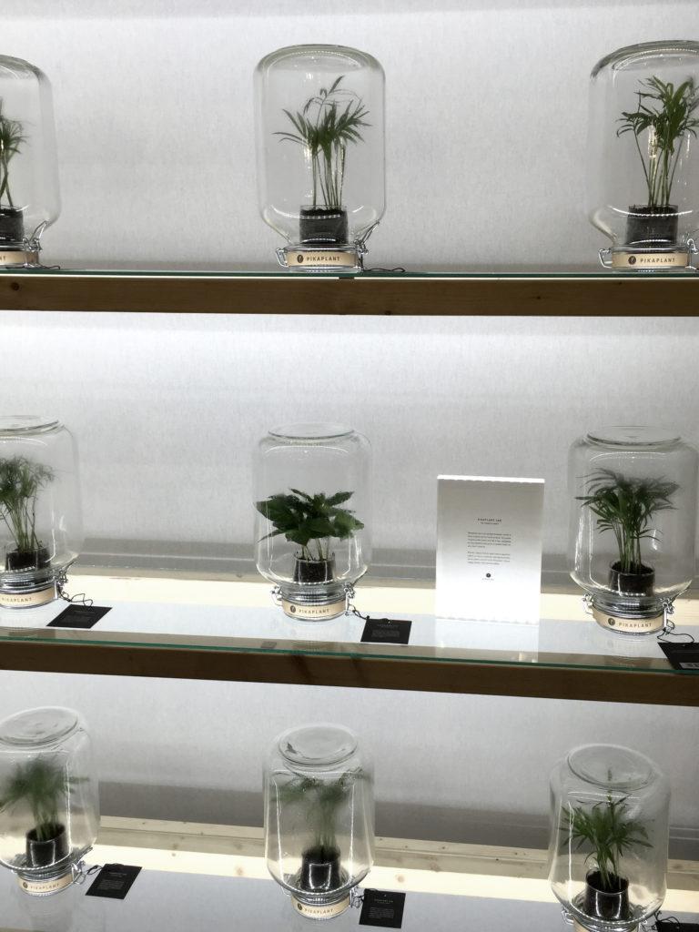 plantera-i-flaska