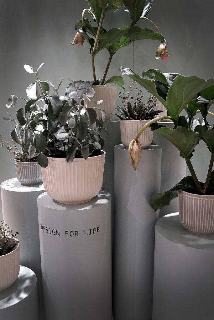Växter i olika varianter - Så här vill vi inreda 2018 - Bostadsbloggen - Svensk Fastighetsförmedling
