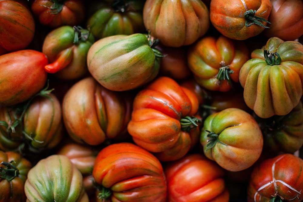 Odla tomater på balkongen
