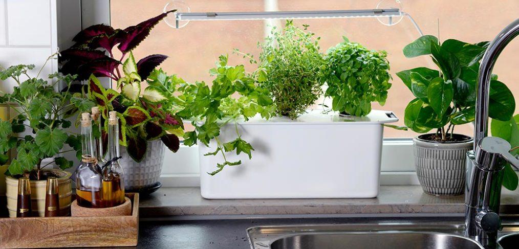 Hydroponisk odling – odla sallad, spenat, örter och tomater året runt
